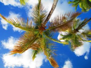 palm tree in front of bright blue sky